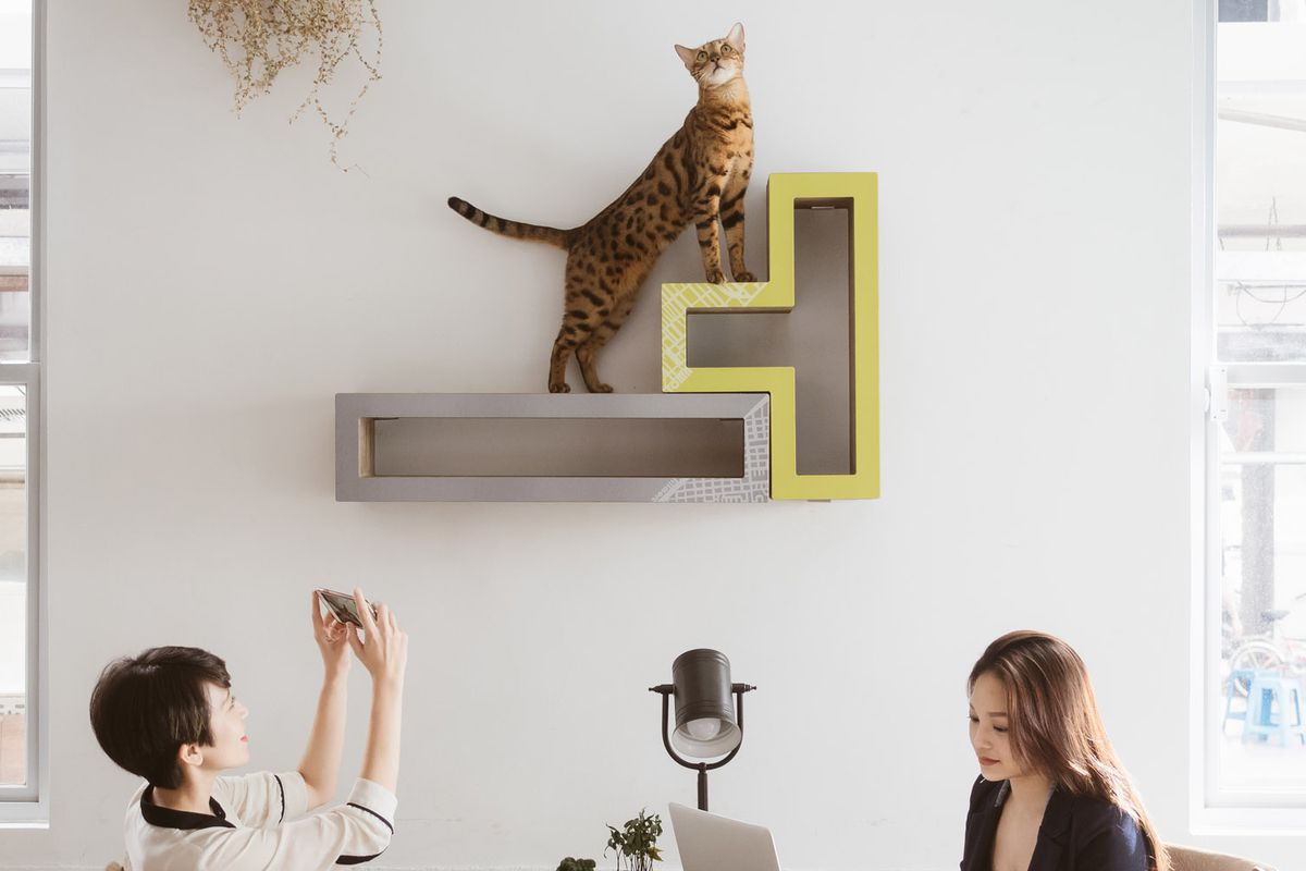 This Modular Furniture Works For Humans And Cats