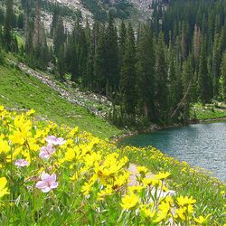 8. The wildflowers are spectacular at Red Pine Lake.