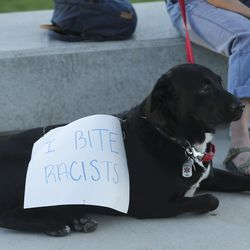 A dog wears a sign as skateboarders protest at the Utah State Capitol during an event called Skate for Solidarity in Salt Lake City on Thursday, June 11, 2020. The protesters joined others across the nation to decry racism and police brutality after the death of George Floyd, a black man who died while being taken into custody by police in Minneapolis.