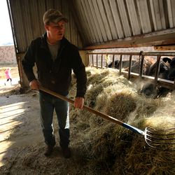 Addison Hicken piles hay into a feed trough for the cattle as he works on his farm in Heber City on Wednesday, March 11, 2020.