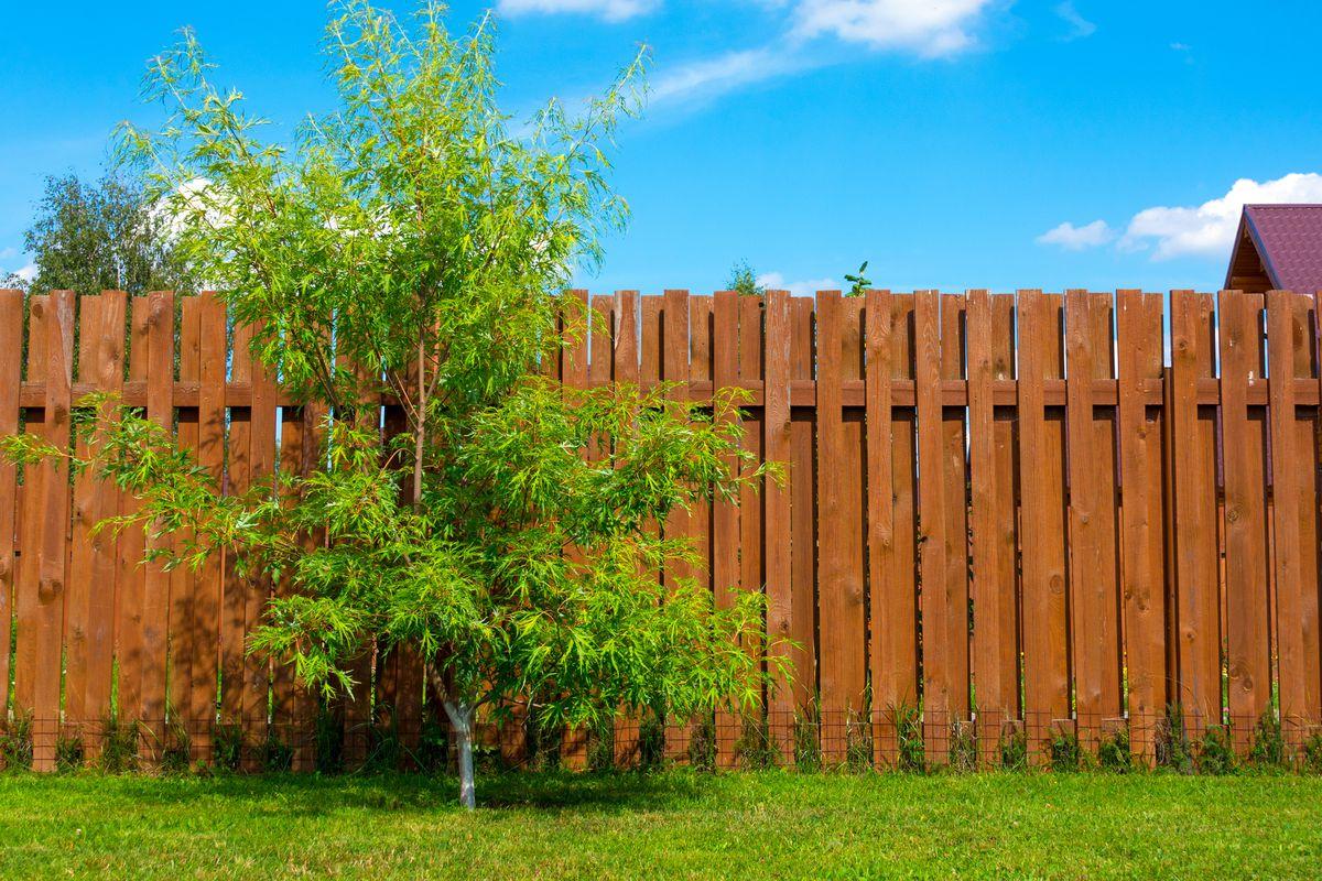 Brown wood vertical board fence in yard.