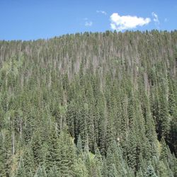 Drought is compromising the ability of trees to take up man-caused carbon dioxide emissions, which has significant implications for climate change, research shows.