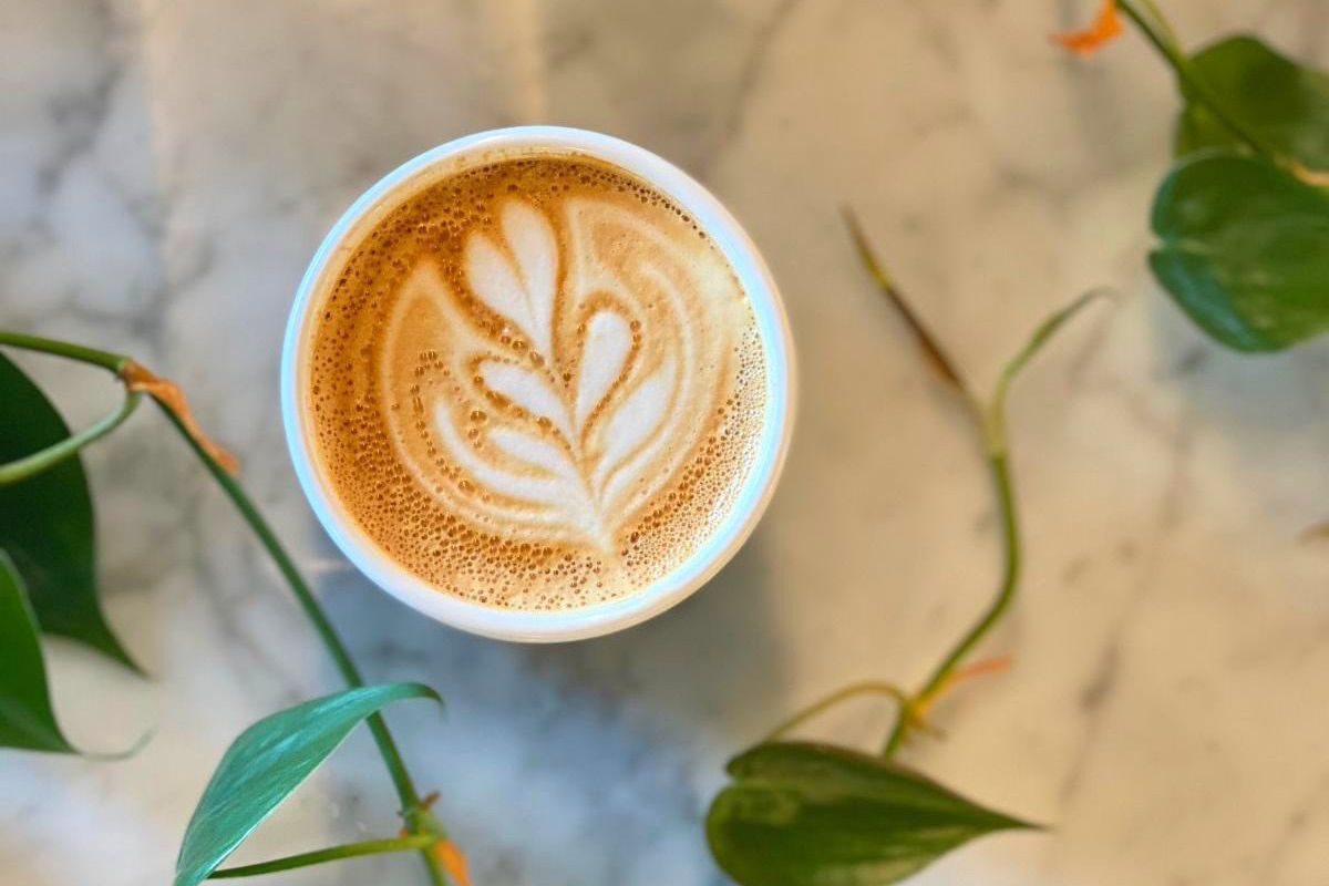 an overhead view of a cup of foamy coffee surrounded by a viney plant on a marble table