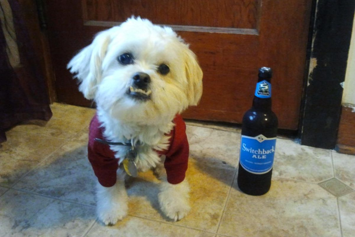 Baxter the pekapoo actually enjoyed the beer he chose this Saturday.