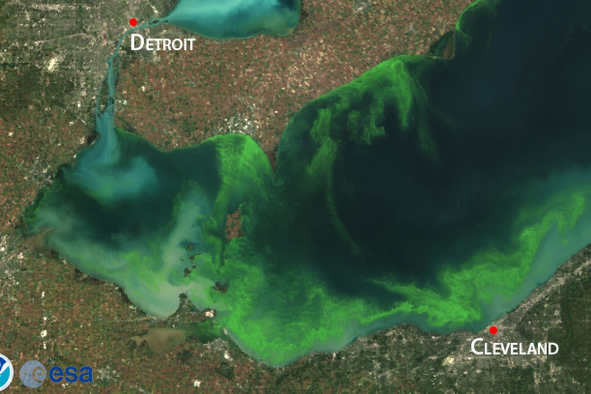 Why toxic algae blooms are taking over Lake Erie — again Vox