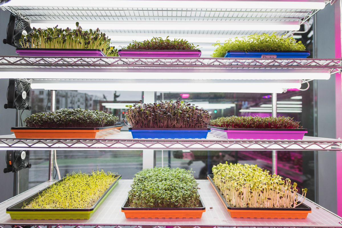 Six trays of different colored sprouts sit on white shelves lit with LED lights at The Soop.