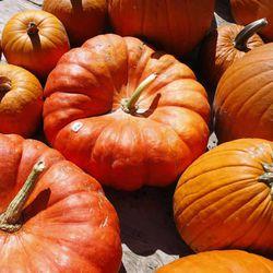 "Bright orange pumpkins on sale at BYU's ""Stadium Farmers Market,"" Thursday, Sept. 23, 2010"