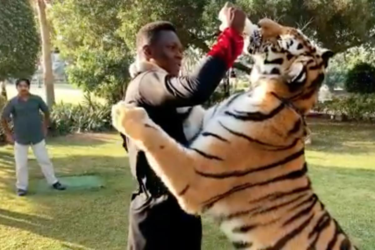 The Weekly Grind: Israel Adesanya feeds tiger, Conor McGregor shaves beard