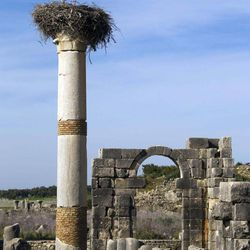In this Thursday, March 8, 2012 photo, a stork nests on top of a pillar at the Basilica, the main administrative building of Volubilis, Morocco's premier Roman ruin near Meknes, Morocco.