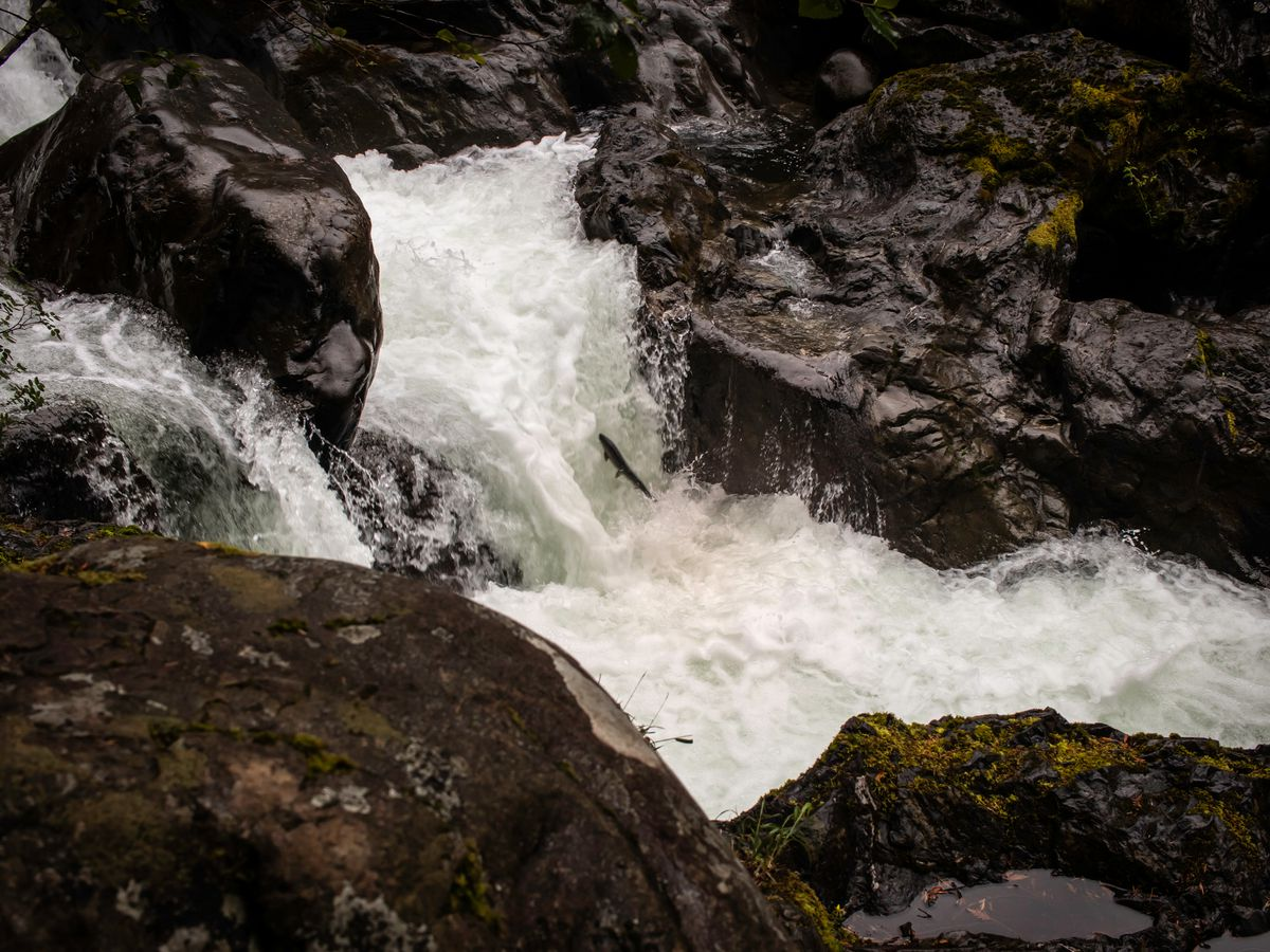A fish leaps up a small waterfall in a rocky landscape.