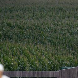 White Sox bullpen pitcher watches from the outfield corn during a baseball game against the Yankees in Dyersville, Iowa.