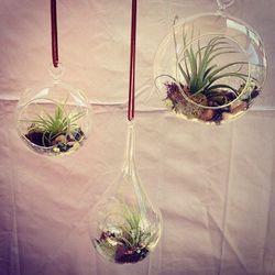Glass terrariums, anyone?
