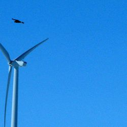 In this April 18, 2013, photo, a golden eagle is seen flying over a  wind turbine on Duke energy's top of the world windfarm in Converse County Wyo. The company has reported 10 golden eagle deaths since it started operation in 2009. It's the not-so-green secret of the nation's wind-energy boom: Spinning turbines are killing thousands of federally protected birds, including eagles, each year.