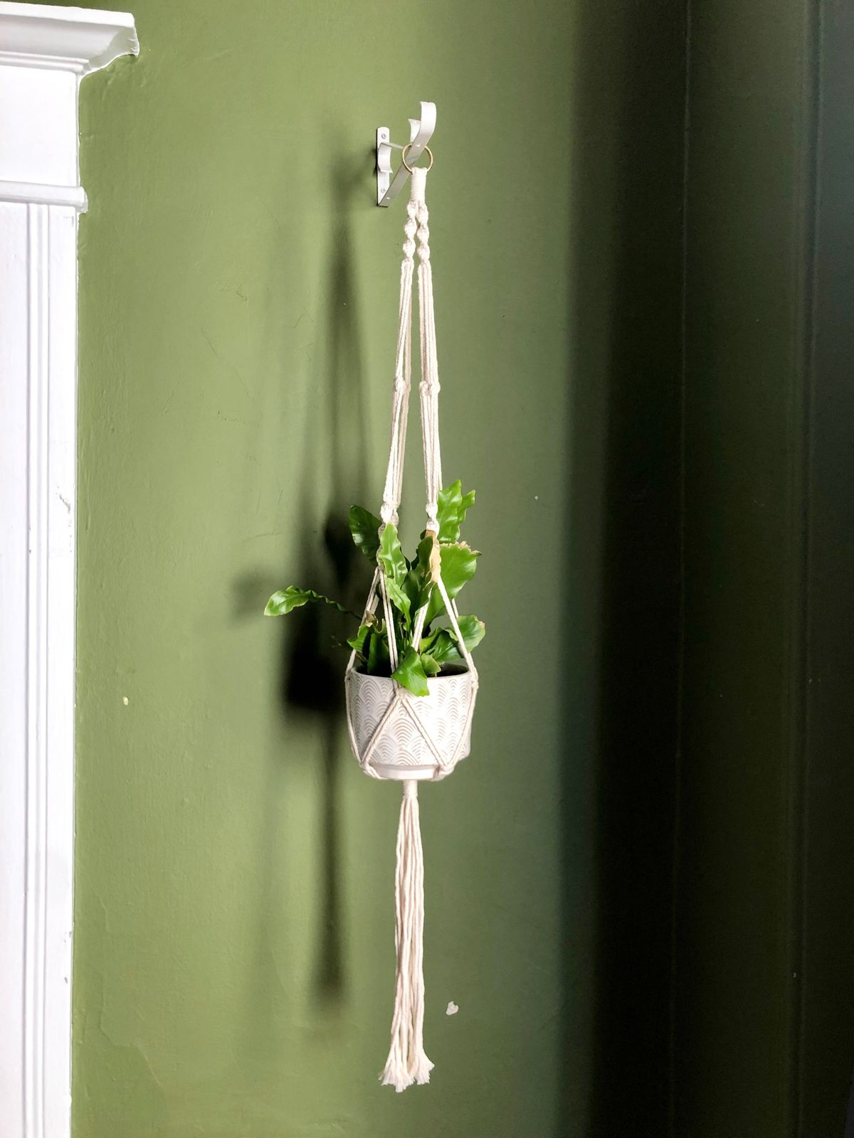 A white braid of macrame hold a green fern in a potted plant, held high against a dark green wall.