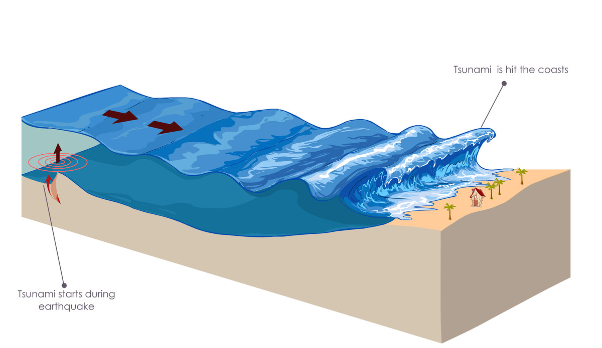 Tsunamis are often triggered by deep-sea earthquakes. They lose speed and gain height as they approach shores.