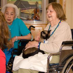 A therapy cat interacts with residents at a senior care facility.