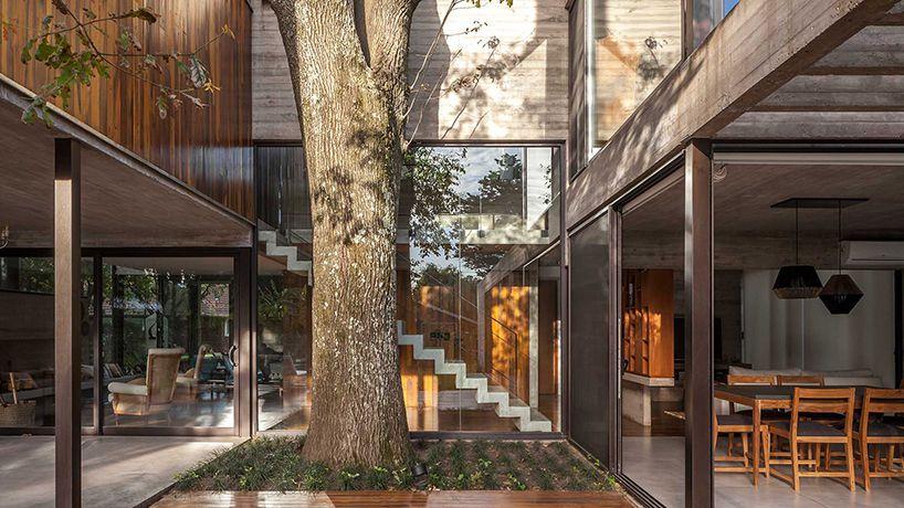 modern house built around trees