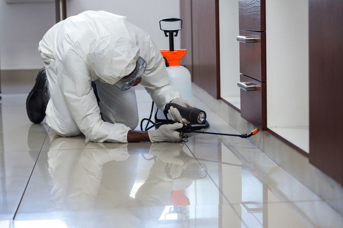 The Best Pest Control in Atlanta, GA (2021) - This Old House