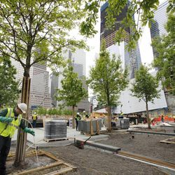 FILE - In this May 13, 2011 file photo, arborist Jeremy DeSimone, left, sprays fertilizer on a swamp white oak at the National September 11 Memorial at the World Trade Center site in New York. The foundation that runs the memorial estimates that once the roughly $700 million project is complete, it will cost $60 million a year to operate.