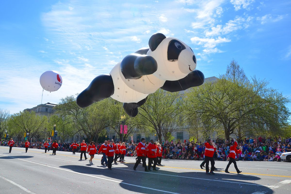 D C S Cherry Blossom Festival Parade 2018 What To Know Before You