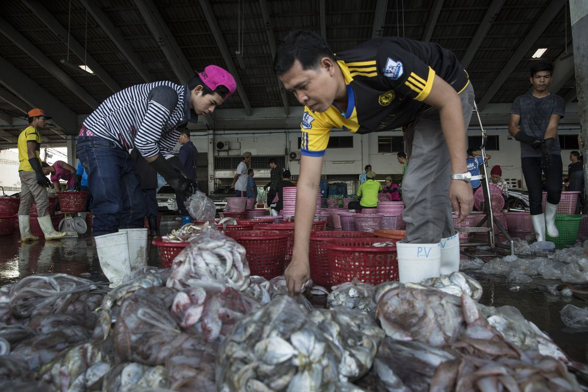 Workers help to sort fish from a boat at the port in Songkhla on February 1, 2016.