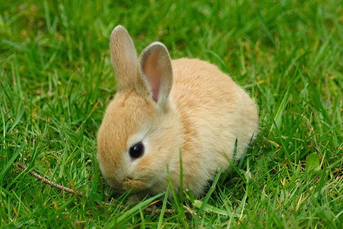 """One of the best things about the UVic campus: all the cute bunnies!!! I'll take my own bunny photos at some point.  (via <a href=""""http://farm2.static.flickr.com/1394/536888745_76bbefa3f6.jpg"""">farm2.static.flickr.com</a>)"""