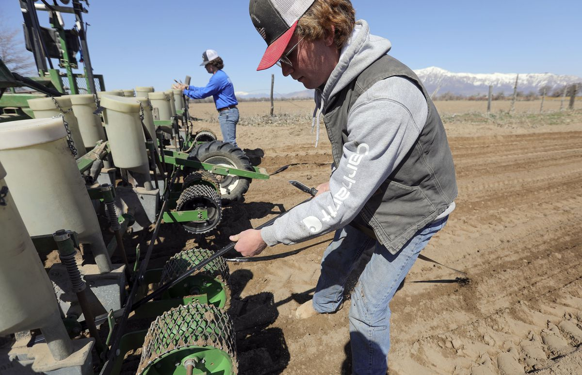 Farmhand Levi Thompson cuts drip tape after installing it at Gibson's Green Acres and Bennett Farms in West Weber, Weber County, on Wednesday, March 31, 2021.