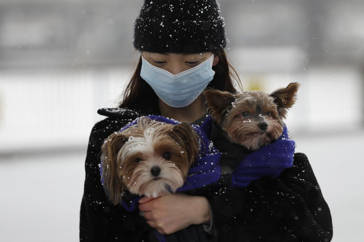 Scientists may have found a new coronavirus spreading from dogs to humans