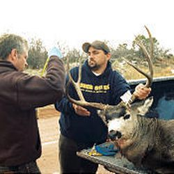 Bill Bates, left, and Griz Oleen check large buck taken off the LaSal Mountains early Monday.