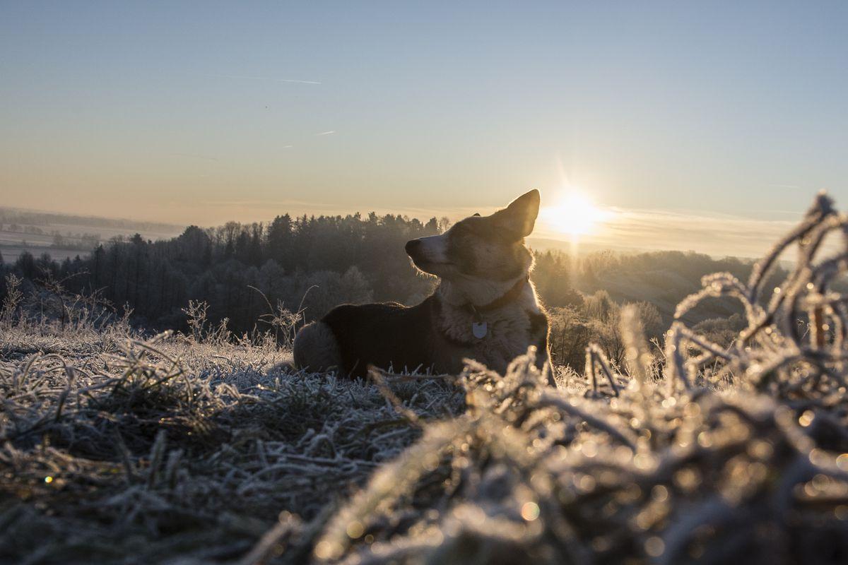 Dawn in Brandenburg