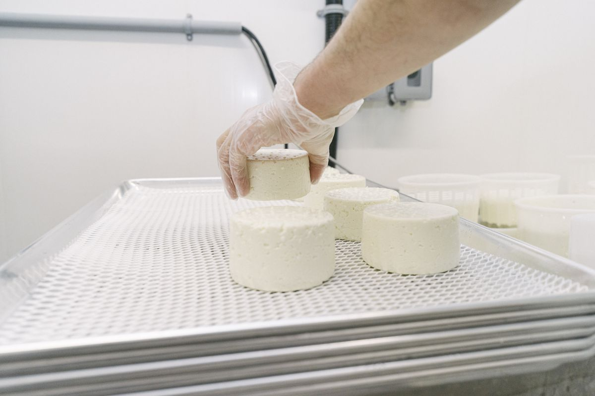 a hand placing fresh white cheese rounds onto a tray to dry