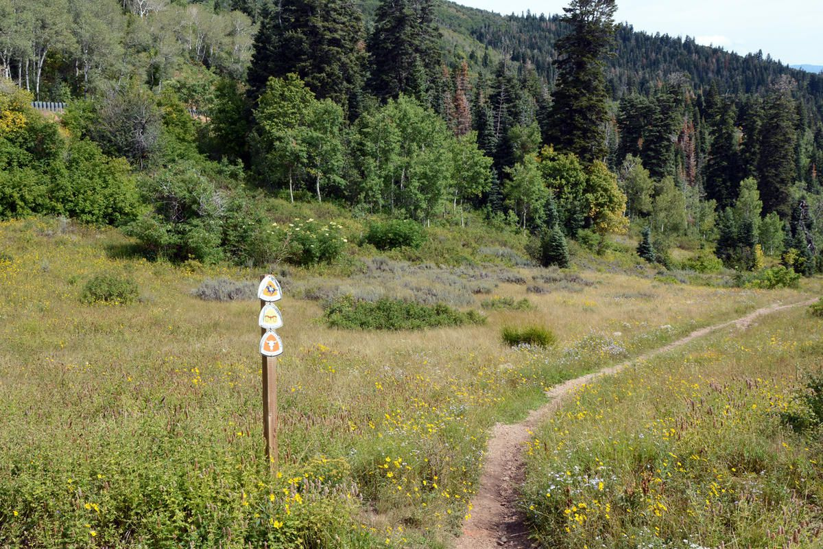 Weber Pathways is inviting the public to put on their walking shoes, hop on a bicycle or start running at Bank of Utah TrailFest 2017, a celebration of Weber County's trail network.