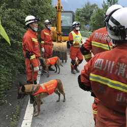 Rescuers with search dogs stand near earthmoving equipment as they wait to work at the site of a landslide in Xinmo village in Maoxian County in southwestern China's Sichuan Province, Sunday, June 25, 2017. Crews searching through the rubble left by a landslide that buried a mountain village under tons of soil and rocks in southwestern China on Saturday found bodies, but more than 100 people remained missing.