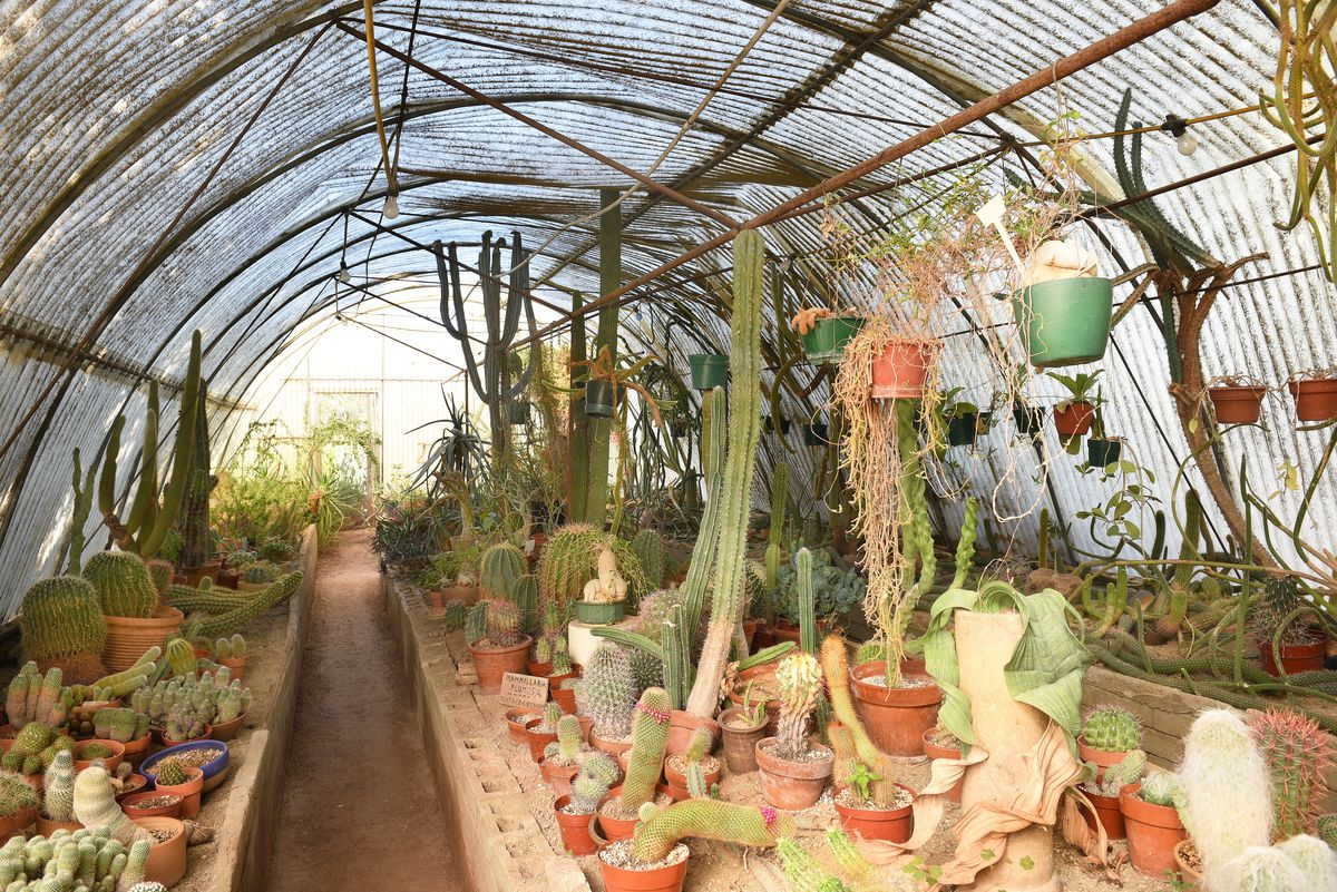 The inside of a greenhouse. There are many plants in planters. The ceiling and walls are glass. The ceiling is curved.