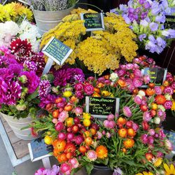 """Another option that stocks interesting blooms and plants is <strong><a href=""""http://www.biritemarket.com/"""">Bi-Rite Market</a></strong>. The price point may not be as competitive, but you can count on the two locations to have some unconventional blooms, m"""