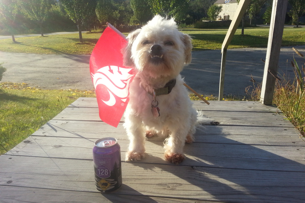 Baxter waves his flag and his beer.