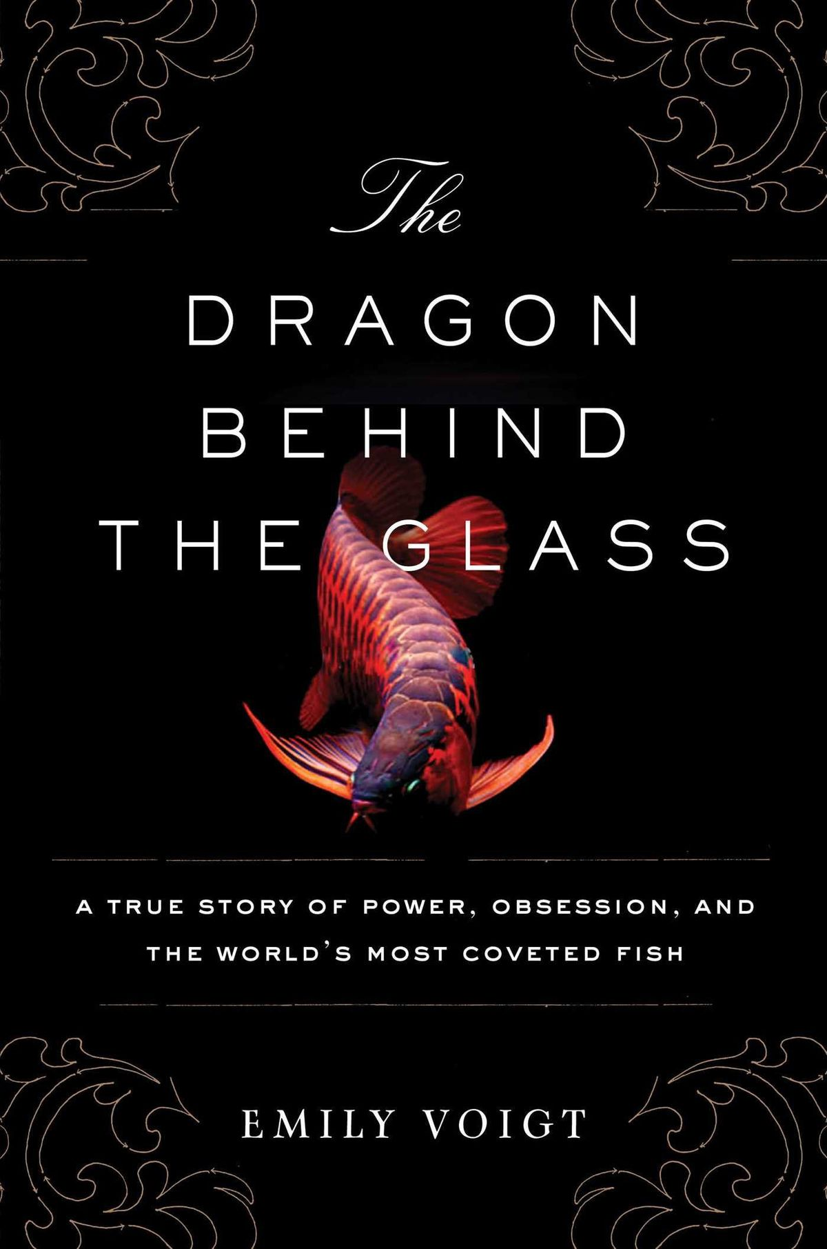 The Dragon Behind the Glass by Emily Voigt