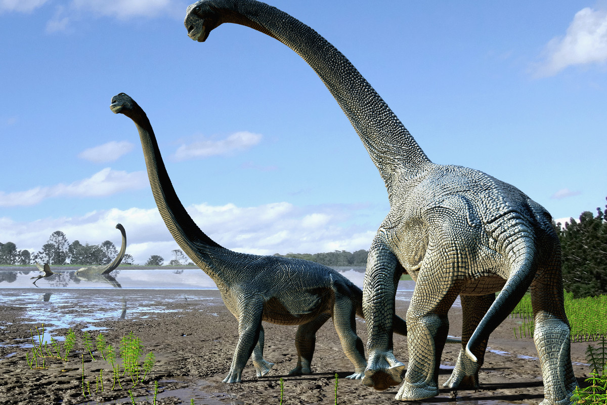 a new dinosaur species has been discovered in australia the verge