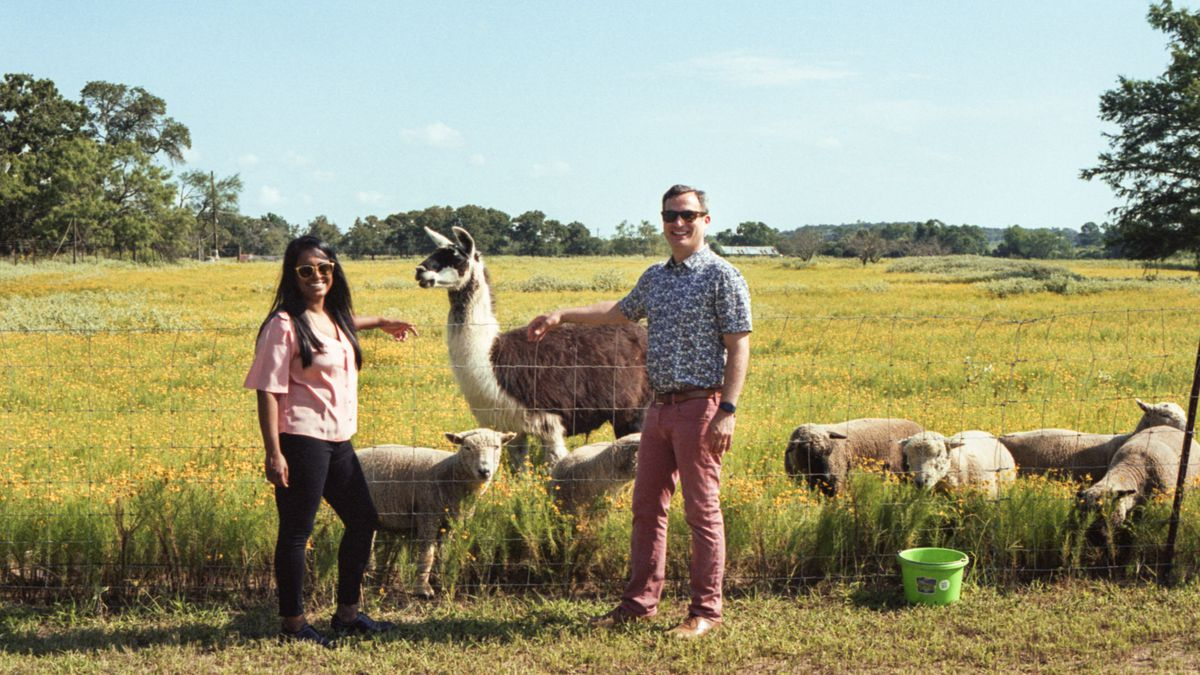 A woman and man, grinning, pose with a llama and flock of sheep. Beyond is an expansive green meadow under a clear blue sky.