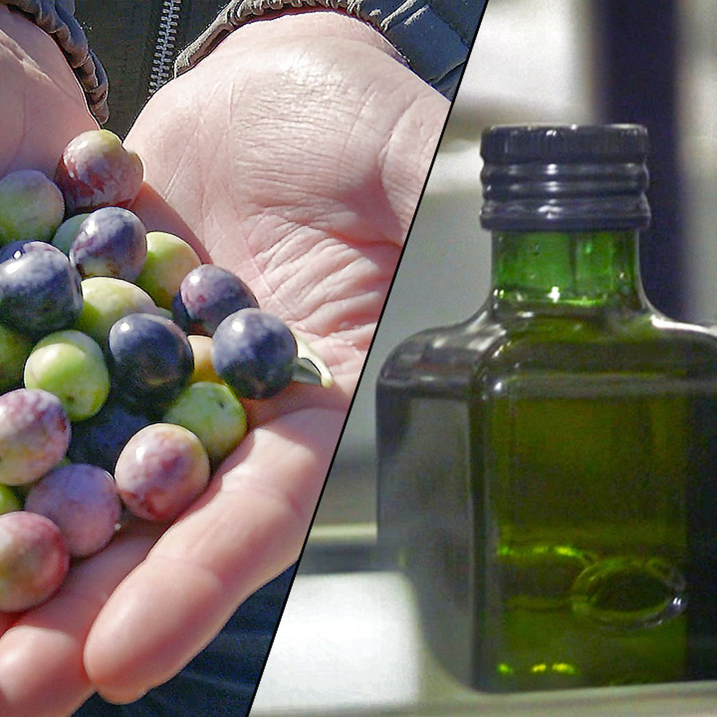 Watch: This California Ranch Is the Biggest Olive Oil