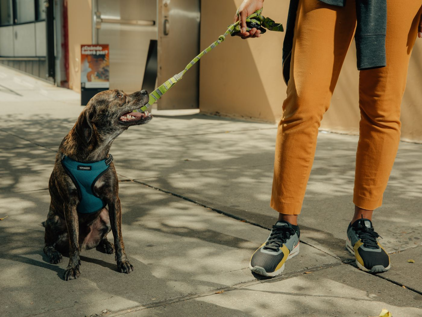 Wag vs  Rover: The pet care startups competing to walk your dog - Vox