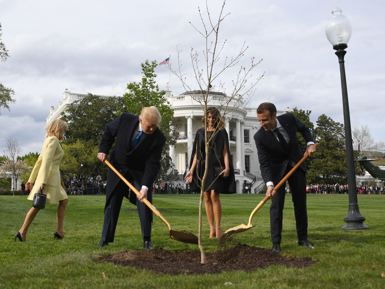 Is the U.S. Really Planting a Billion Trees, as Trump Said""