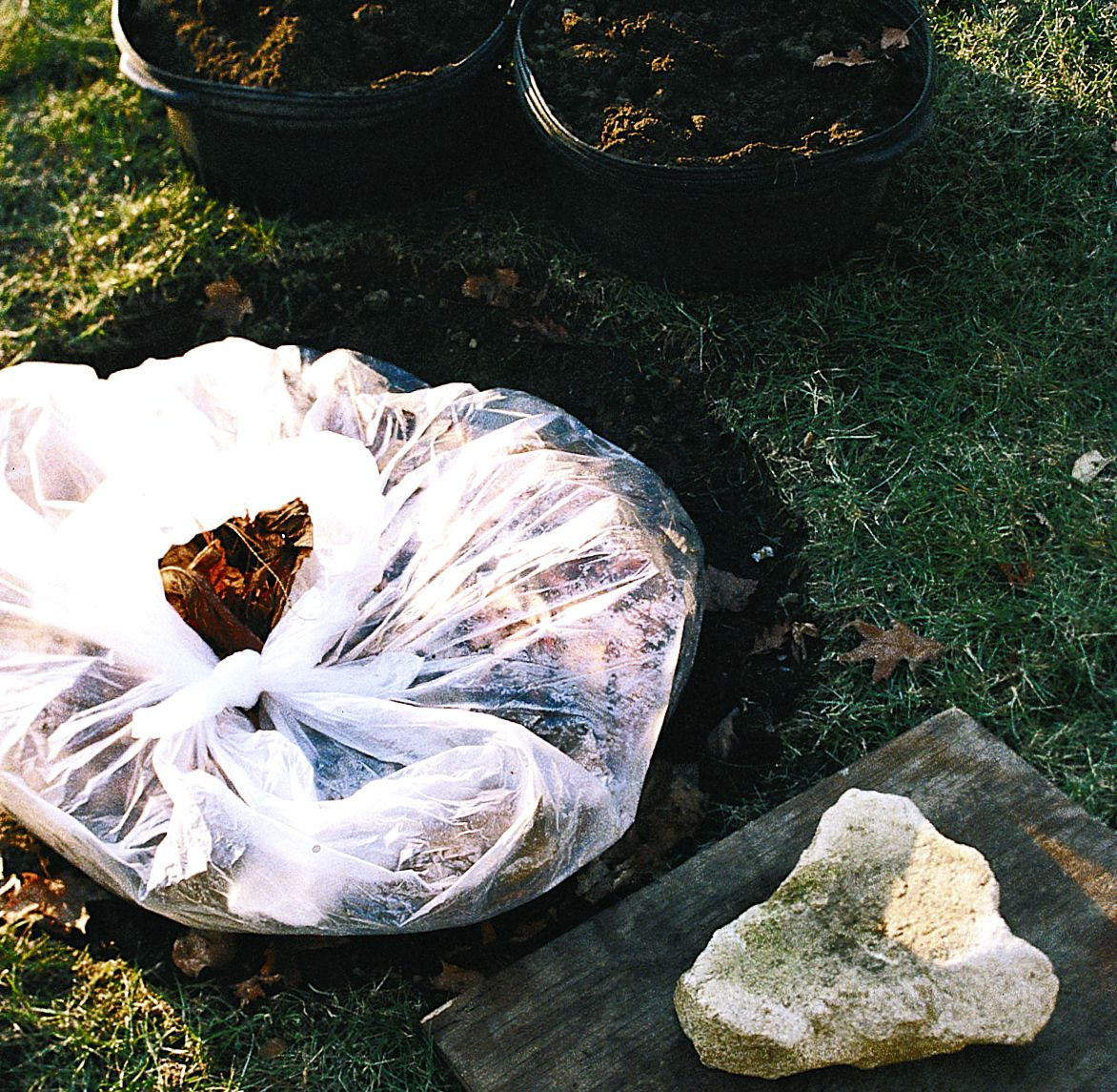 A bag full of fallen leaves to insulate the hole for the Christmas tree plant.