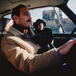 """In this film publicity image released by Roadside Attractions, Nim Chimpsky, rides with Professor Herbert Terrace in a scene from """"Project Nim."""""""