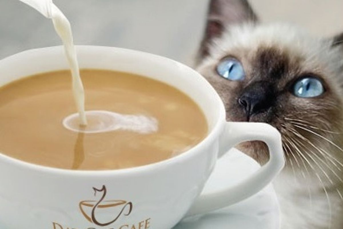 Coffee Cat Cafe Houston