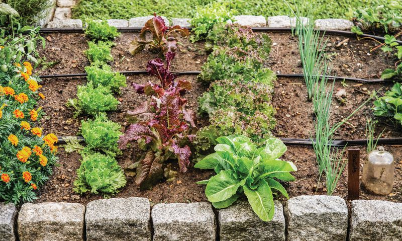 Summer 2021, Landscaping, vegetable and herb garden, irrigation drip lines