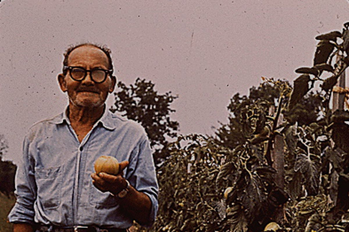 Bluford Potts in this file photo, inspecting his prize tomatoes