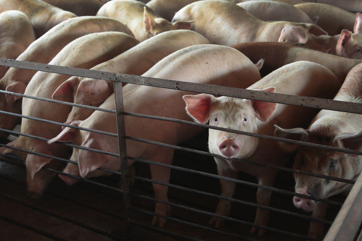 animal welfare stalled in the legislature could make major