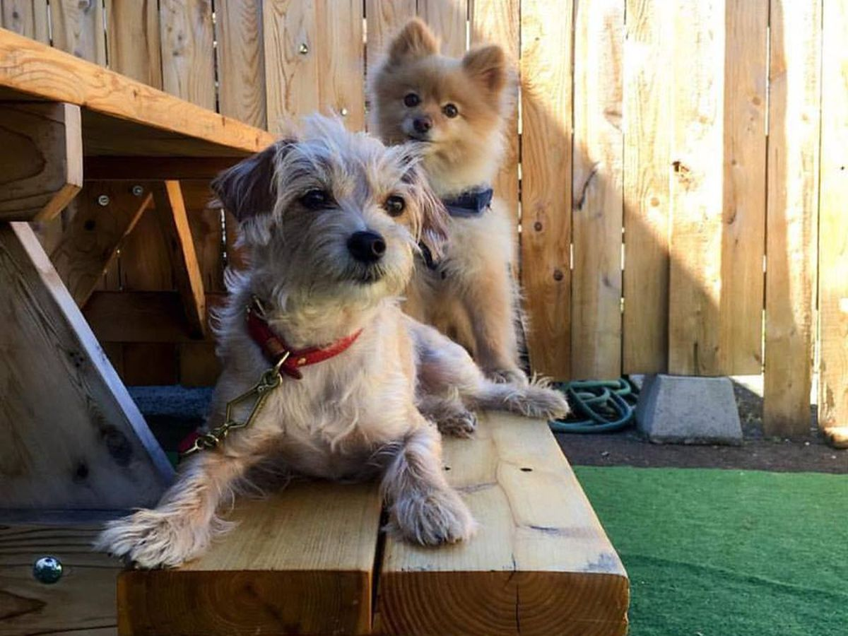 19 Dog-Friendly Bars and Restaurants in Portland, Mapped