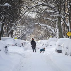A person walks a dog in the Edgewater neighborhood Tuesday morning,